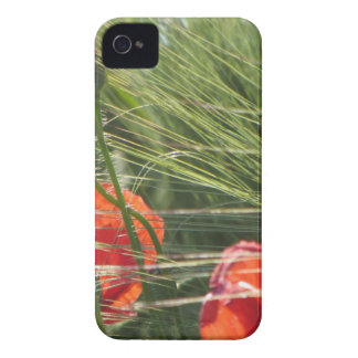 Poppies in Field iPhone 4 Cases