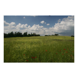 Poppies in Fields Poster