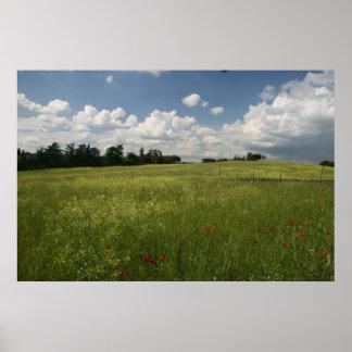Poppies in Fields Print