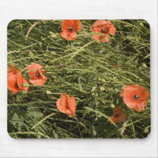 poppies in wheat mousepads