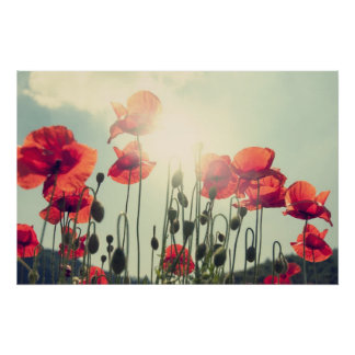 Poppies Posters