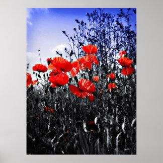 Poppies Print