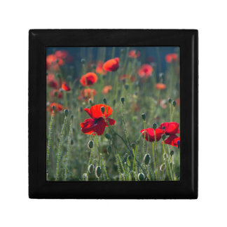 poppies small square gift box