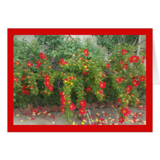 Popping Red Blooms- Song of Sol. 4:1 Greeting Card
