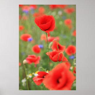 Poppy 2012 poster
