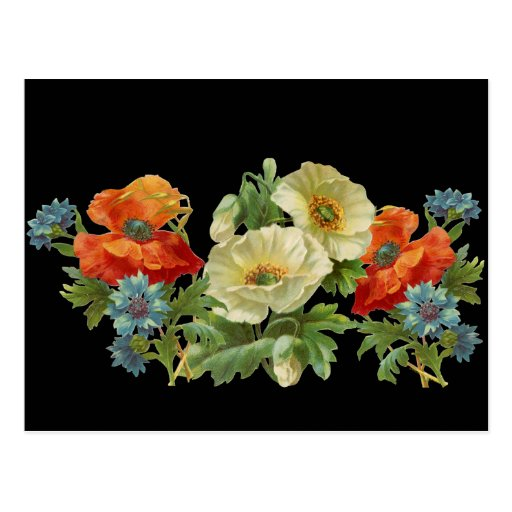 Poppy and Cornflowers Vintage Floral Postcard Post Cards