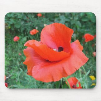 poppy bloom corn poppy in red mouse pad