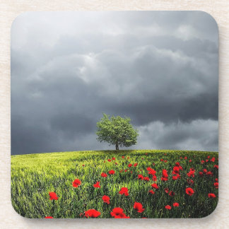 Poppy Field and Cloudy Sky Drink Coaster