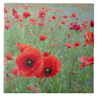 Poppy field in Vernon. Large Square Tile