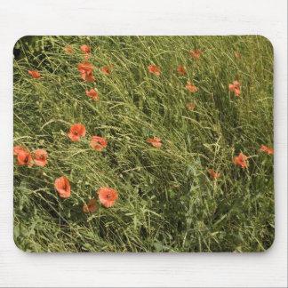 Poppy Field Mousepads
