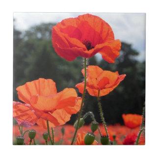 Poppy Field, Rosy Tangerine Flowers Ceramic Tile