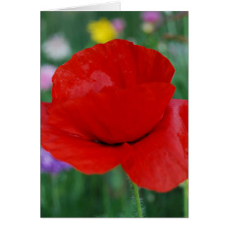 Poppy flower and meaning greeting card