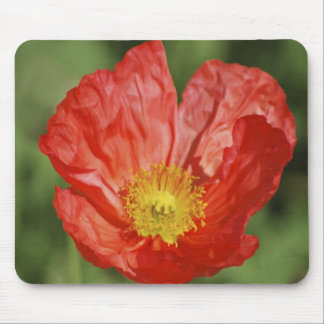Poppy flower and meaning mousepad
