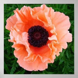 Poppy Flower Poster Print