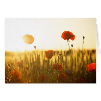 Poppy flowers in sunlight card