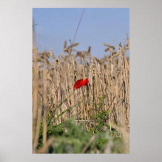 Poppy in Field Posters