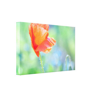 Poppy in the wind canvas print
