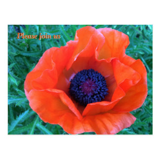 POPPY Oriental Red Orange --- Postcard