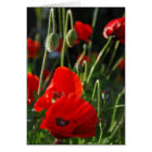 Poppy Passion Card