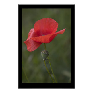 Poppy. Poster by cARTerART
