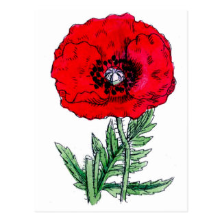 poppy red flowers vintage vines blossoms postcard