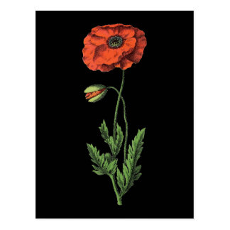 Poppy red vintage art postcard