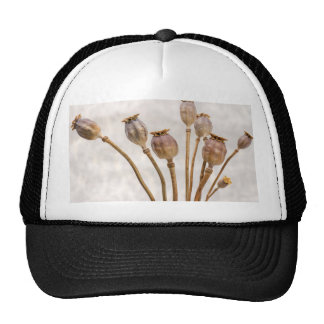 Poppy Straw Pods Cap