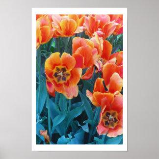 """Poppy Tulips"" Poster"