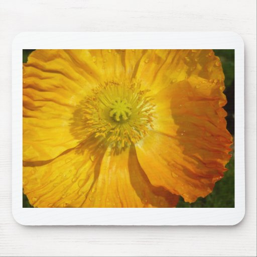 poppy,yellow mouse pad