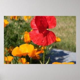 poppys poster