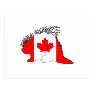 Porcupine Canada Postcard