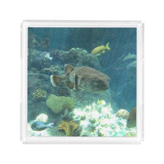 Porcupine Fish Acrylic Tray