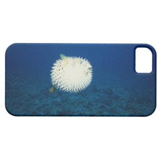Porcupine Fish iPhone 5 Case