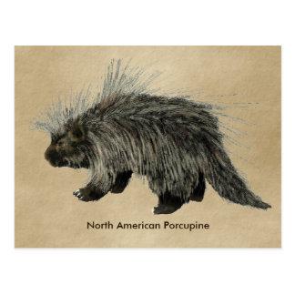 Porcupine On Old Paper Postcard