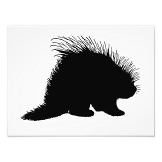 Porcupine silhouette photo print