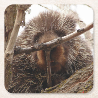 Porcupine Up a Tree Paper Coaster