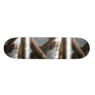 Porcupine with a Funny Nose Skateboard
