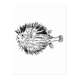 Porcupinefish  aka blowfish postcard