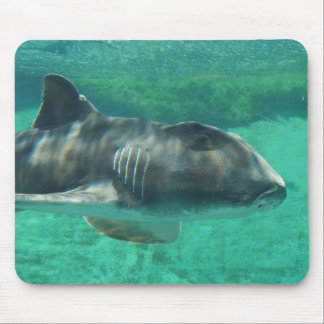 Port Jackson Shark Mouse Pad