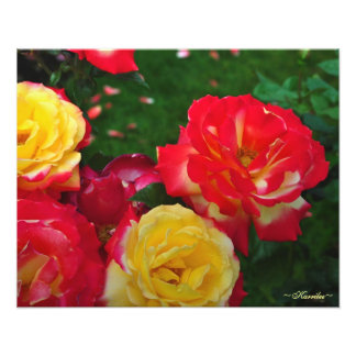 Portland Rose Garden Photography by Karrilee 2012 Art Photo