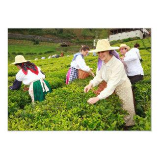Porto Formoso tea gardens Card