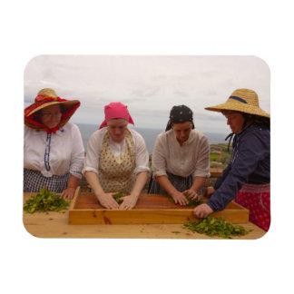 Porto Formoso tea gardens Rectangular Photo Magnet