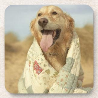 Portrait dog on beach under quilt. Fall Beverage Coaster