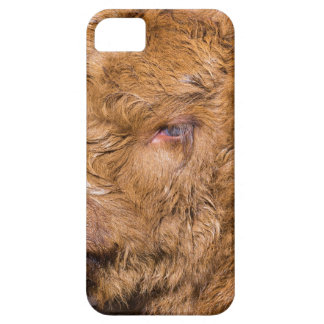 Portrait head newborn scottish highlander calf iPhone 5 cover