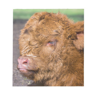 Portrait head newborn scottish highlander calf notepads