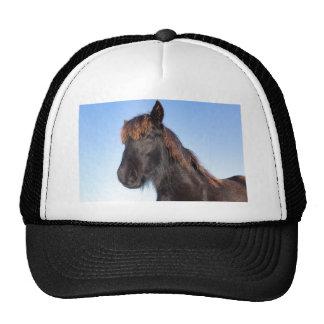 Portrait head of black Frisian horse Cap