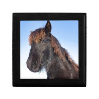 Portrait head of black Frisian horse Gift Box