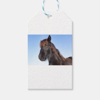 Portrait head of black Frisian horse Gift Tags