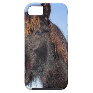 Portrait head of black Frisian horse iPhone 5 Cases