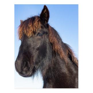 Portrait head of black Frisian horse Postcard